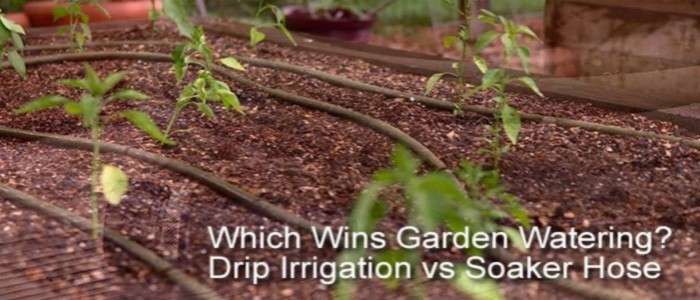 Drip Irrigation vs Soaker Hose: Which is Best?