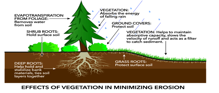How do Plants Prevent Soil Erosion