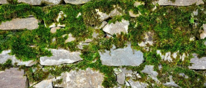 How to Grow Moss on Stone