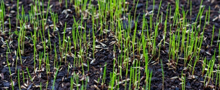 Will Grass Seed Germinate On Top Of Soil