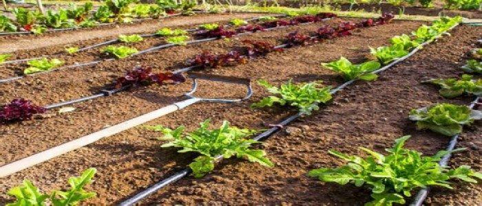 best soaker hoses for vegetable gardens