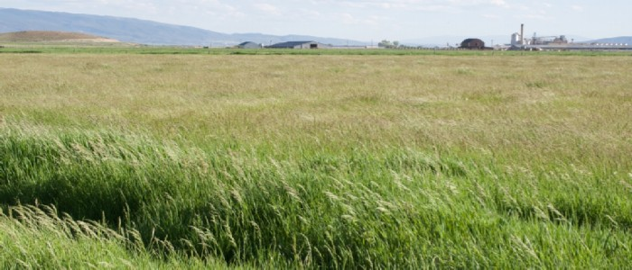 best time to plant pasture grass seed