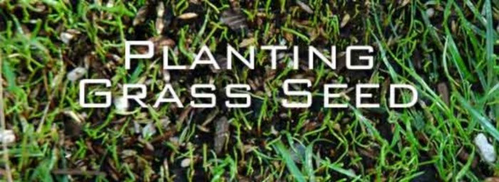 when is the best time to plant grass seed