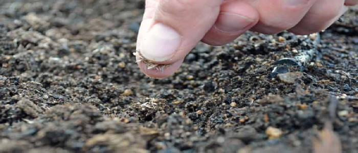 when is it too late to sow grass seed