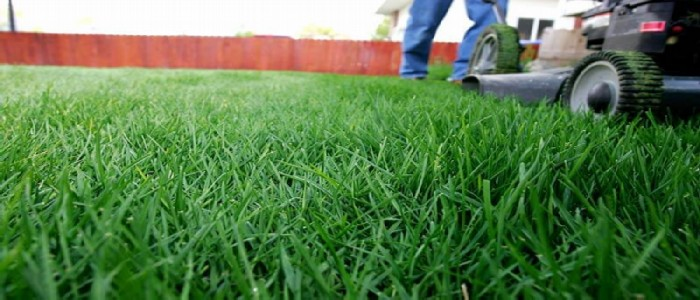 when to mow new grass from seed
